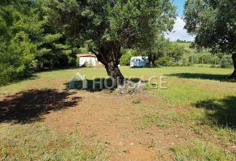 Land for sale in Nikitas, Sithonia, Greece - photo 4