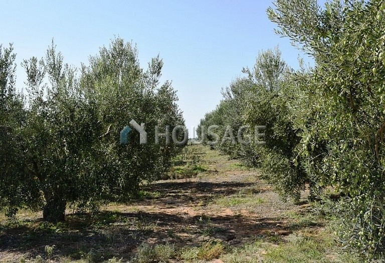 Land for sale in Nea Triglia, Chalcidice, Greece - photo 5