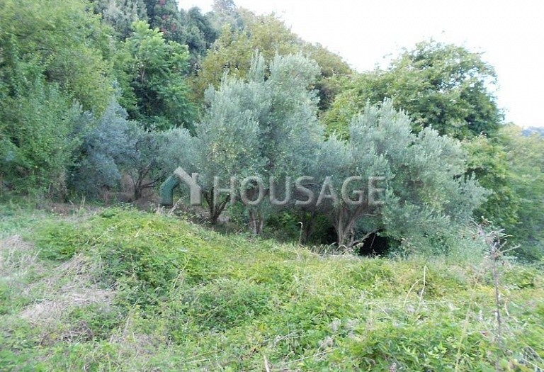 Land for sale in Cherefto, Magnesia, Greece - photo 5