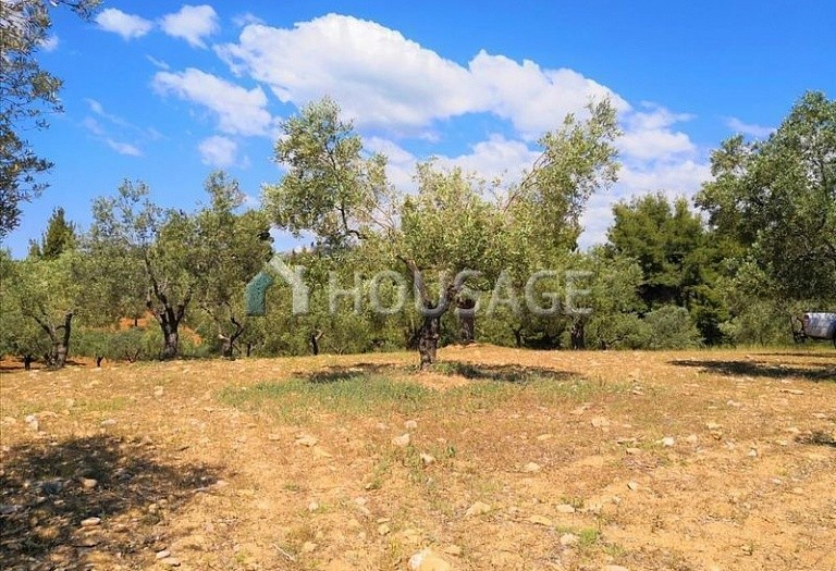 Land for sale in Agios Nikolaos, Sithonia, Greece - photo 5