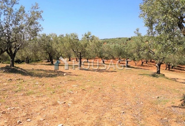 Land for sale in Agios Nikolaos, Sithonia, Greece - photo 11
