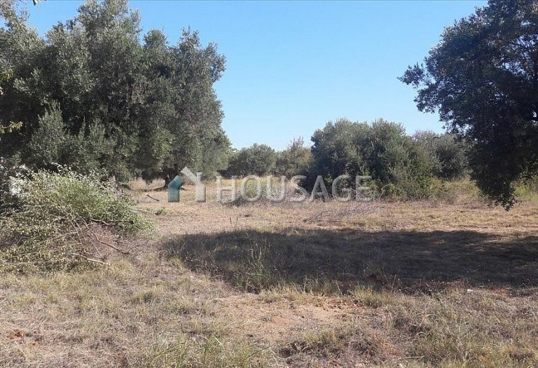 Land for sale in Nikitas, Sithonia, Greece - photo 2