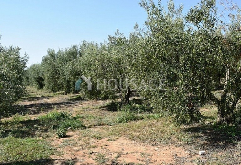 Land for sale in Nea Triglia, Chalcidice, Greece - photo 4