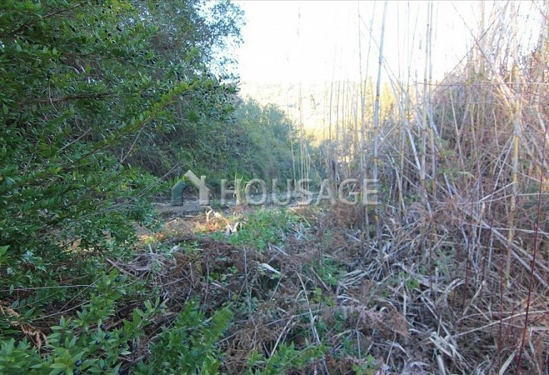 Land for sale in Kerkira, Greece - photo 4