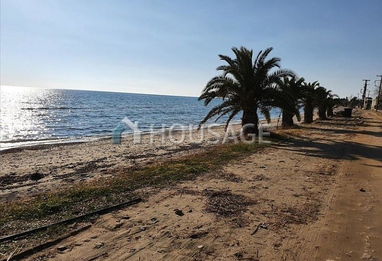 Land for sale in Nea Triglia, Chalcidice, Greece - photo 1