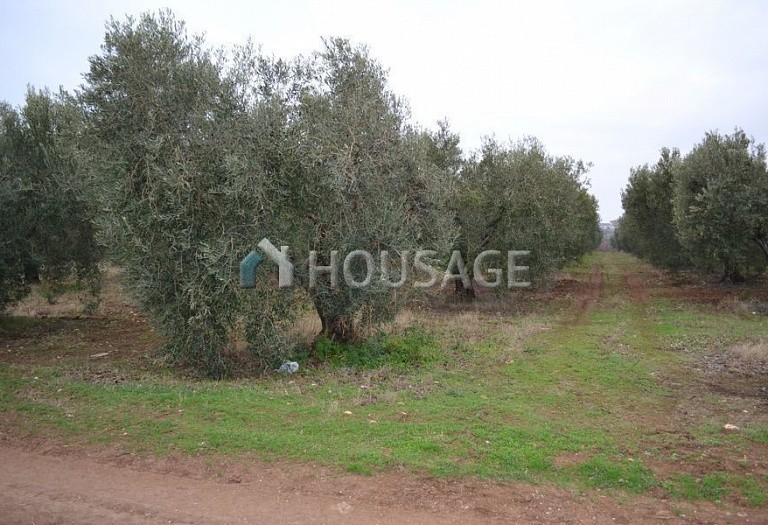 Land for sale in Nea Moudania, Kassandra, Greece - photo 4