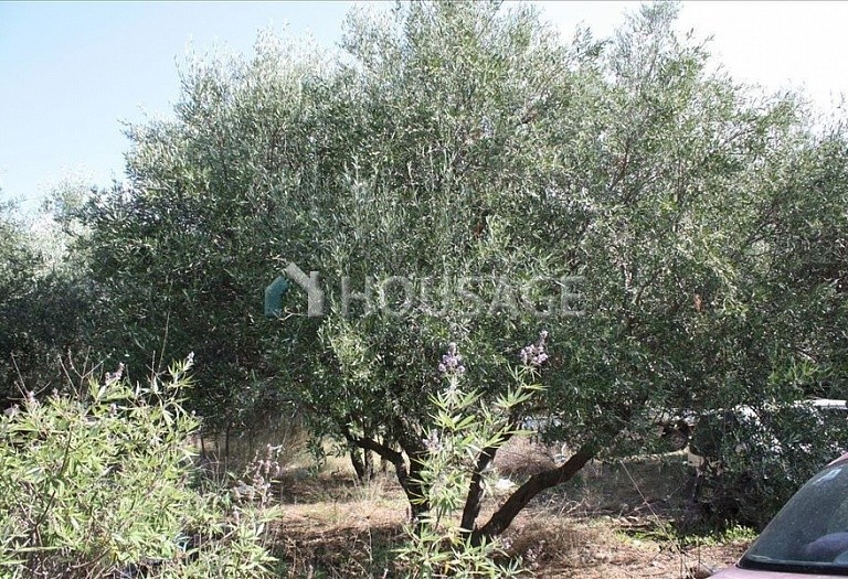 Land for sale in Kastellion, Chania, Greece - photo 5
