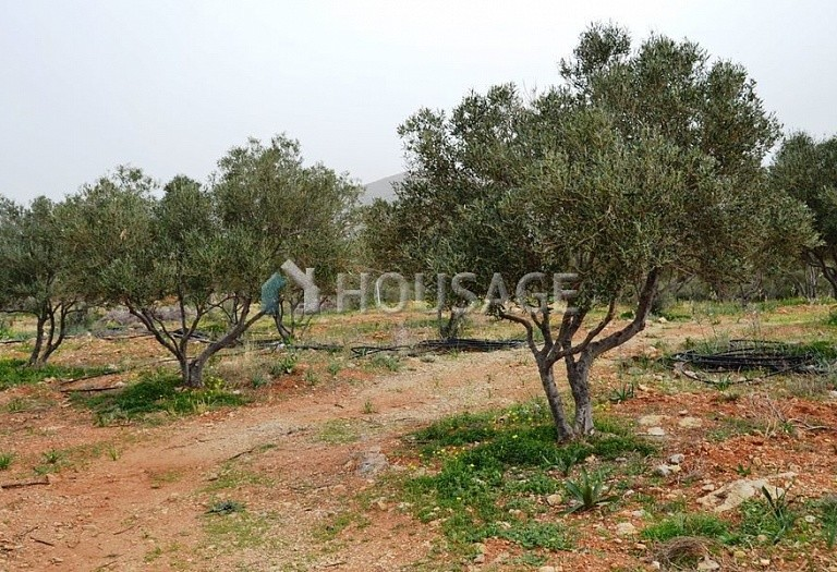 Land for sale in Milatos, Lasithi, Greece - photo 3
