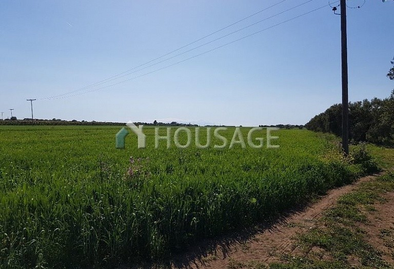 Land for sale in Lagkadas, Salonika, Greece - photo 5