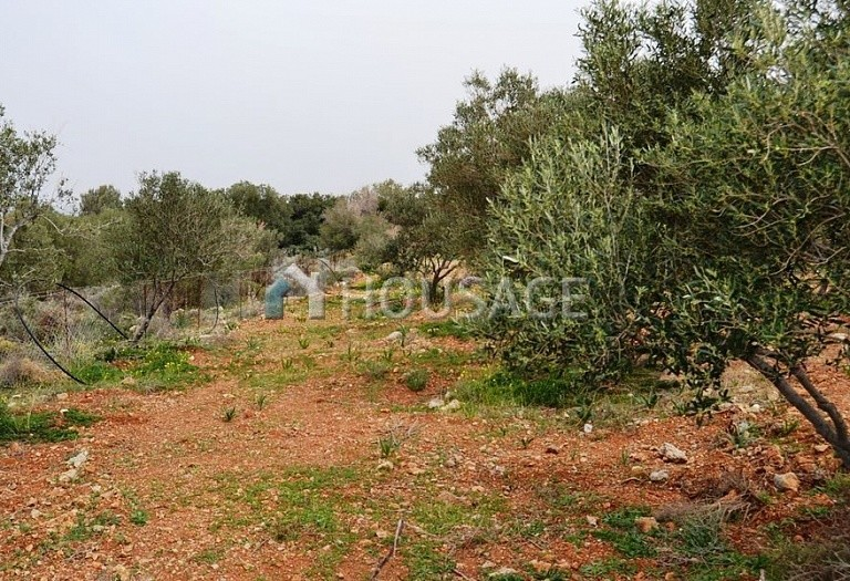 Land for sale in Milatos, Lasithi, Greece - photo 4