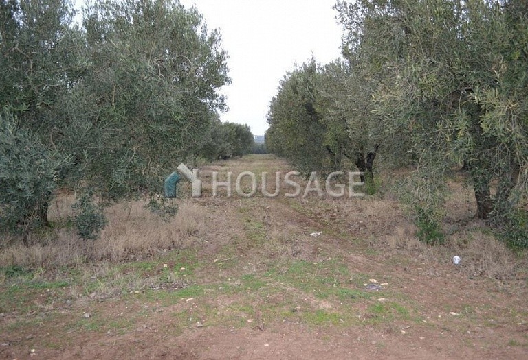 Land for sale in Nea Moudania, Kassandra, Greece - photo 2