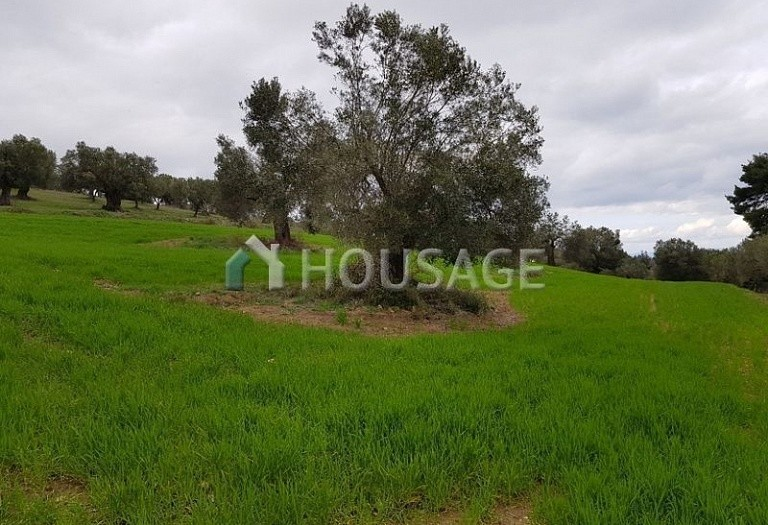 Land for sale in Paliouri, Kassandra, Greece - photo 1