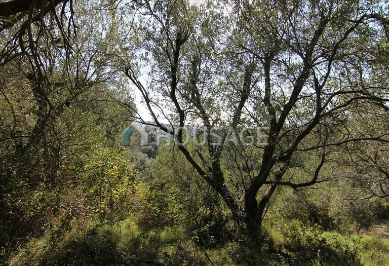 Land for sale in Magoulades, Kerkira, Greece - photo 4