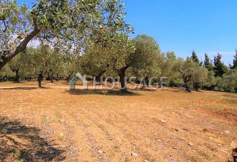 Land for sale in Agios Nikolaos, Sithonia, Greece - photo 3