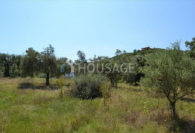 Land for sale in Hanioti, Kassandra, Greece, 1000 m² - photo 4