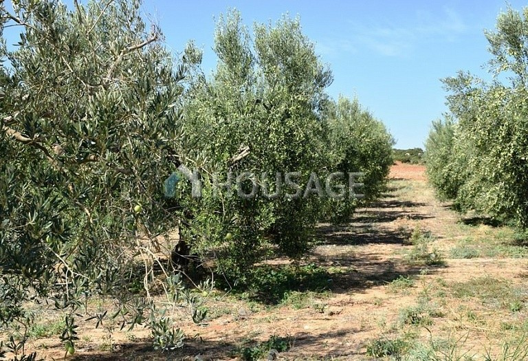 Land for sale in Nea Triglia, Chalcidice, Greece - photo 6