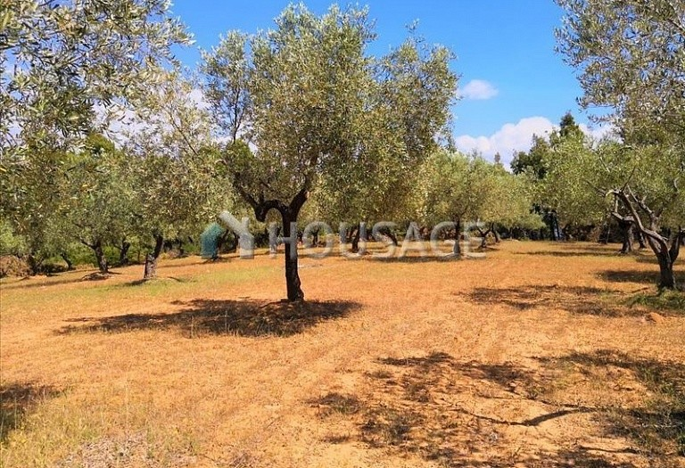 Land for sale in Agios Nikolaos, Sithonia, Greece - photo 10