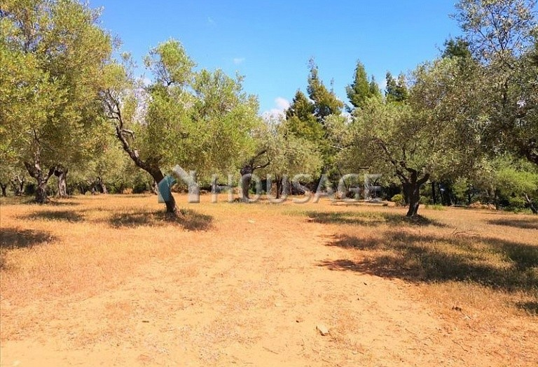 Land for sale in Agios Nikolaos, Sithonia, Greece - photo 9