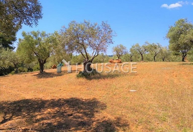 Land for sale in Agios Nikolaos, Sithonia, Greece - photo 8