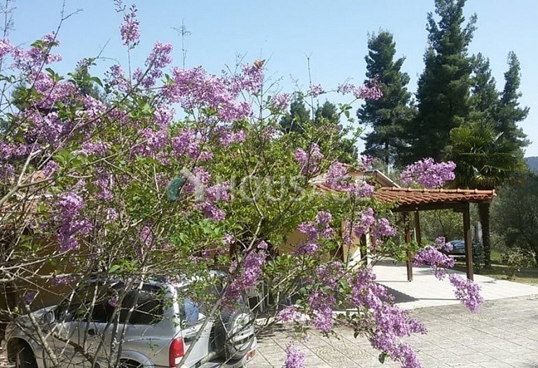 2 bed a house for sale in Paliouri, Kassandra, Greece, 80 m² - photo 5