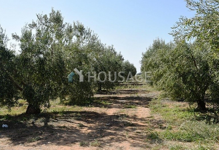 Land for sale in Nea Triglia, Chalcidice, Greece - photo 2